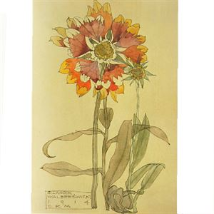 Picture of Mackintosh Study of Gilardia Mounted Print