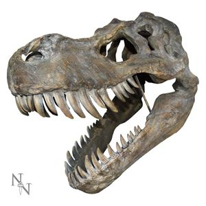 Picture of T-Rex Skull Model